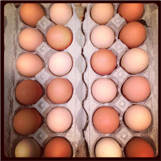 Eggs from the farm