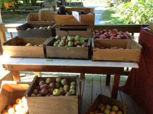 B Grade Produce--looks good, doesn't it?